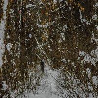 тропинка в лесу :: Юлия Денискина