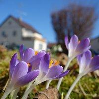 Весна?? Весна!!!!! :: Galina Dzubina