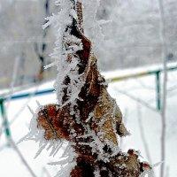 Иней на листьях :: Асылбек Айманов
