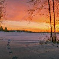 """""""Я из лесу вышел, был сильный мороз."""" © :: Александр Никитинский"""