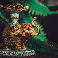 Слон :: Inessa Shabalina