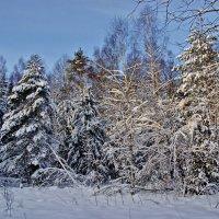 Зимний лес :: Андрей K.