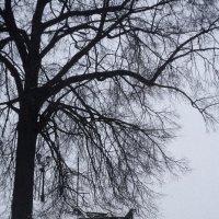 лестница под деревом :: сергей крючков