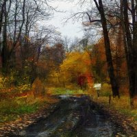Старый парк :: Иван Миронов