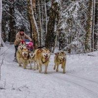 Зимние катания :: Владимир Орлов