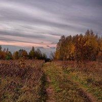 Уходящая в осень :: Владимир Макаров