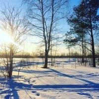 Зимнее солнце :: olgaNikel