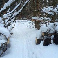 По новой лыжне :: olgaNikel