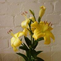 Желтая лилия :: татьяна