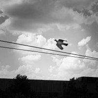 Граючись з вітром. :: Андрий Майковский