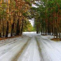 Так тих и светел зимний лес. :: Валентина ツ ღ✿ღ