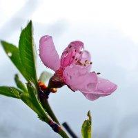 Скоро весна! :: Nina Streapan