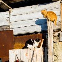 """Весна - коты """"прилетели"""" :: Мария Букина"""