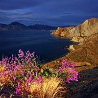В утреннем свете сияют горы и цветы :: viton