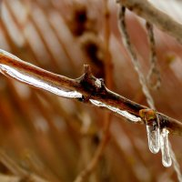 ветка с почкой во льду :: Александр Прокудин
