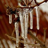 плачет зима :: Александр Прокудин