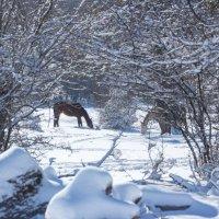 А там под снегом свежая трава :: Нина Сигаева