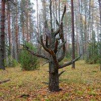 Идол лесной... :: марк
