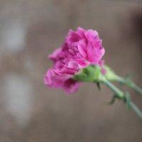 Цветы в фокусе :: Дмитрий