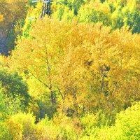 Осень золотая :: Олег Оборин