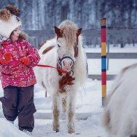 смелей, мой коник! :: Андрей Пашков