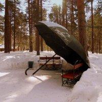 Интерьер в лесу. :: Мила Бовкун