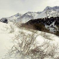 Конец зимы :: Александр Грищенко