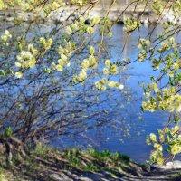 Весна идёт, весне дорогу... :: Ольга