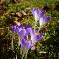 Весна уже в пути!... :: Galina Dzubina