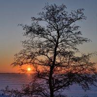 Финский залив. :: Юрий Скрипченков