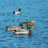 На озере :: Swetlana V