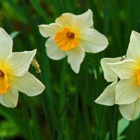 С первым днем весны! :: Светлана