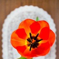 Здравствуй, весна! :: Irina-77 Владимировна
