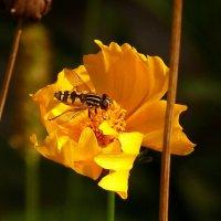 в желтом цветке :: Александр Прокудин