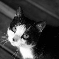Кошак :: Алексей Немчинов