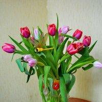 И первые тюльпаны   изящны и нежны :: Валентина Папилова