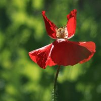 Вальс цветов :: Татьяна Панчешная