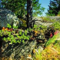 Карелия, Беломорский район, деревня Сальнаволок :: Сергей Кочнев