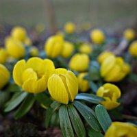 Пусть Вам весна приносит только счастье! :: Galina Dzubina