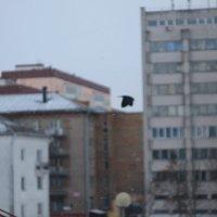 Не в фокусе :: Дмитрий