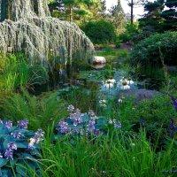 Loki Schmidt Garten (серия). У воды :: Nina Yudicheva
