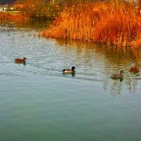 На пруду в орнитологическом парке :: Элина Любицкая (Одинова)