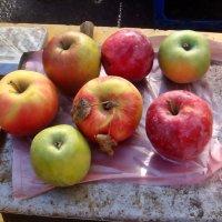 Эти яблочки я купила в нашем дворе :: Нина Корешкова