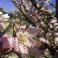 Весна пришла! :: Елена Григорьева