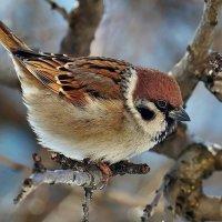 Кстати о птичках... :: Александр Резуненко