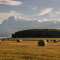 Уборка урожая :: Лариса Березуцкая