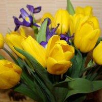 Тюльпановый праздник! :: ЕВГЕНИЯ