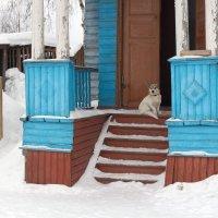 По-хозяйски. :: Татьяна Копосова