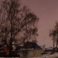 Плакучие берёзы. :: Мила Бовкун
