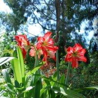 В лучах солнышка купаются цветы в моём саду... :: Лара Гамильтон